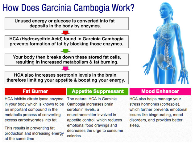 how-garcinia-cambogia-works
